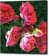 Roses Roses Canvas Print