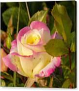 Roses Warm Hearts Canvas Print