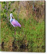 Rosie The Spoonbill Canvas Print