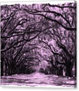Rosy Road Canvas Print