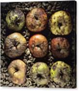 Rotten Apples Canvas Print