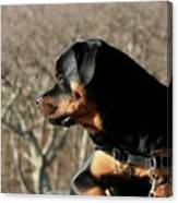 Rottie Profile Canvas Print