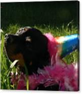 Rottweiler Princess Canvas Print