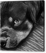 Rotty Canvas Print