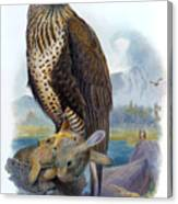 Rough Legged Buzzard Hawk Antique Bird Print The Birds Of Great Britain Canvas Print