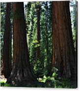 Round Meadow Sequoia Family Portrait Canvas Print