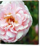 Round Ruffled And Pink Canvas Print