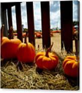 Row Of Pumpkins Sitting Canvas Print