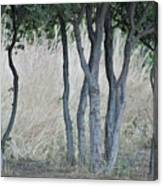 Row Of Trees Canvas Print