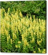 Row Of Yellow Flowers Canvas Print