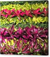 Rows Of Bromeliads Canvas Print