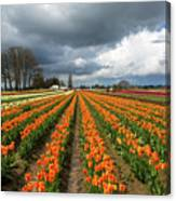 Rows Of Colorful Tulips At Festival Canvas Print