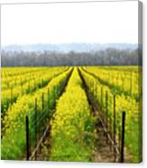 Rows Of Wild Mustard Canvas Print