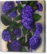 Royal Blue Hydrangea Canvas Print