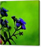 Royal Blue In A Sea Of Green Canvas Print