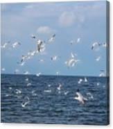 Royal Blue Ocean Tern Canvas Print