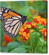 Royal Butterfly Canvas Print