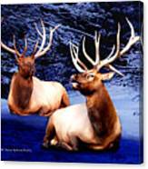 Royal Elk Canvas Print