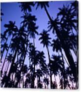 Royal Palm Grove Canvas Print