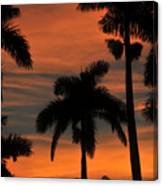 Royal Palms Canvas Print