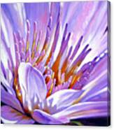 Royal Purple And Gold Canvas Print