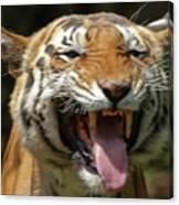 Royal Tiger Canvas Print