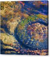 Rubber Fish Canvas Print