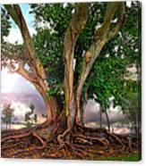 Rubber Tree Canvas Print