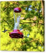 Ruby-throated Hummingbird 3 Canvas Print