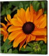 Rudbeckia Flower In Bloom Canvas Print