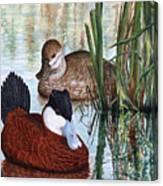 Ruddy Ducks Canvas Print