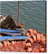 Ruddy Turnstones Perching On Fishing Nets Canvas Print