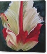 Ruffled Tulip  Canvas Print