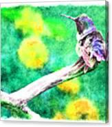Ruffled Hummingbird - Digital Paint 5 Canvas Print