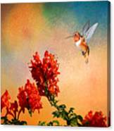 Rufous Dream Canvas Print
