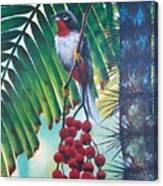 Rufous-throated Solitaire Canvas Print