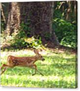 Run Bambi Run Canvas Print