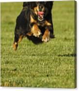 Run Dog Run Canvas Print