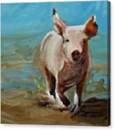 Run Pig Run Canvas Print