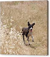 Run Puppy Run Canvas Print