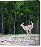 Running Deer Canvas Print