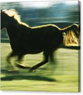 Running Horse Backlit Canvas Print