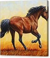 Running Horse - Evening Fire Canvas Print