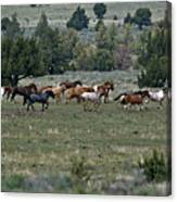 Running Wild Horses  Canvas Print