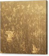 Rural Field At Sunrise Canvas Print