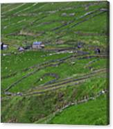 Rural Landscape On Dingle Peninsula Canvas Print
