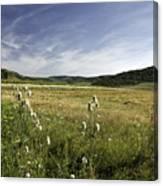 Rural Scenic Landscape Canvas Print