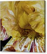 Russet And Umber Iris Canvas Print