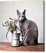 Russian Blue 02 Canvas Print