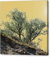 Russian Olive Canvas Print